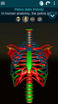 Osseous System in 3D (Anatomy) Mod
